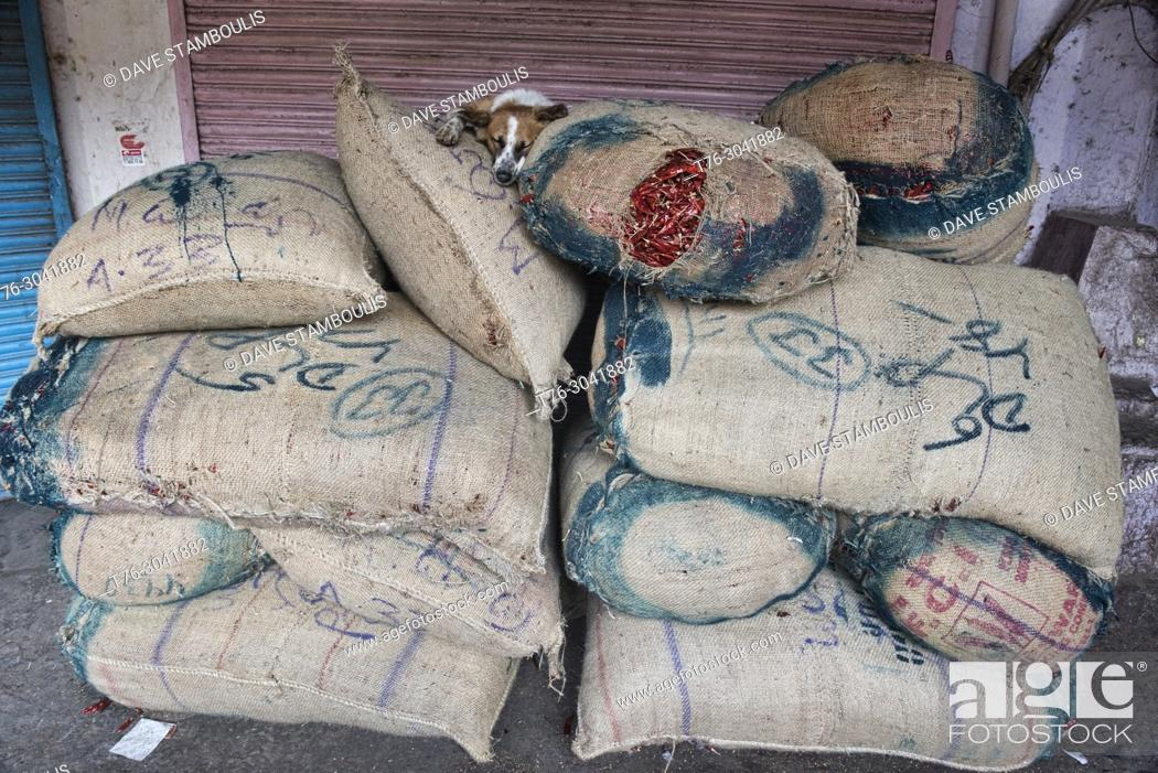 Stock Photo: Let sleeping dogs lie, dog on top of chiles in the Khari Baoli Spice Market, Old Delhi, India.