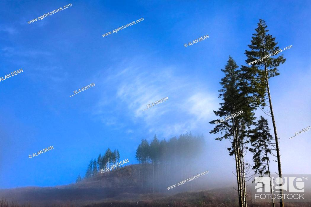 Stock Photo: Early moring sun begins to clear lowl cloud from forested hills in rural British Columbia.
