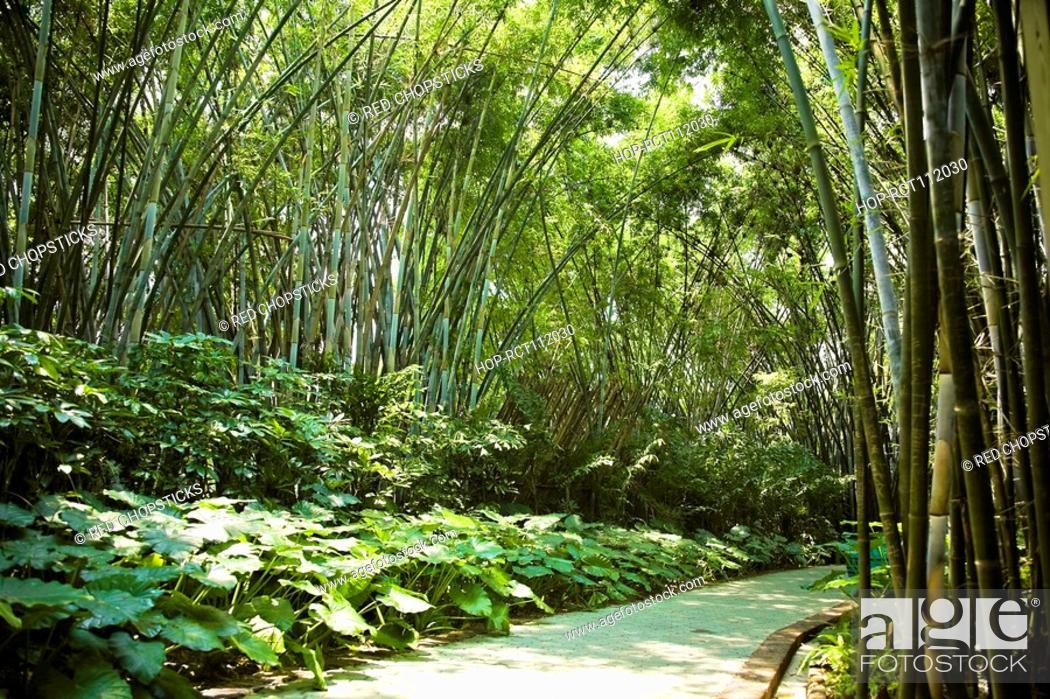 Stock Photo: Footpath passing through a park, Xiangjiang Safari Park, Guangzhou, Guangdong Province, China.