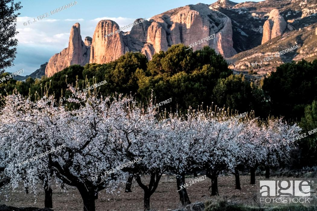 Stock Photo: Almond tree flowering with Rock formation at Riglos mountain range background. Huesca, Aragon, Spain.