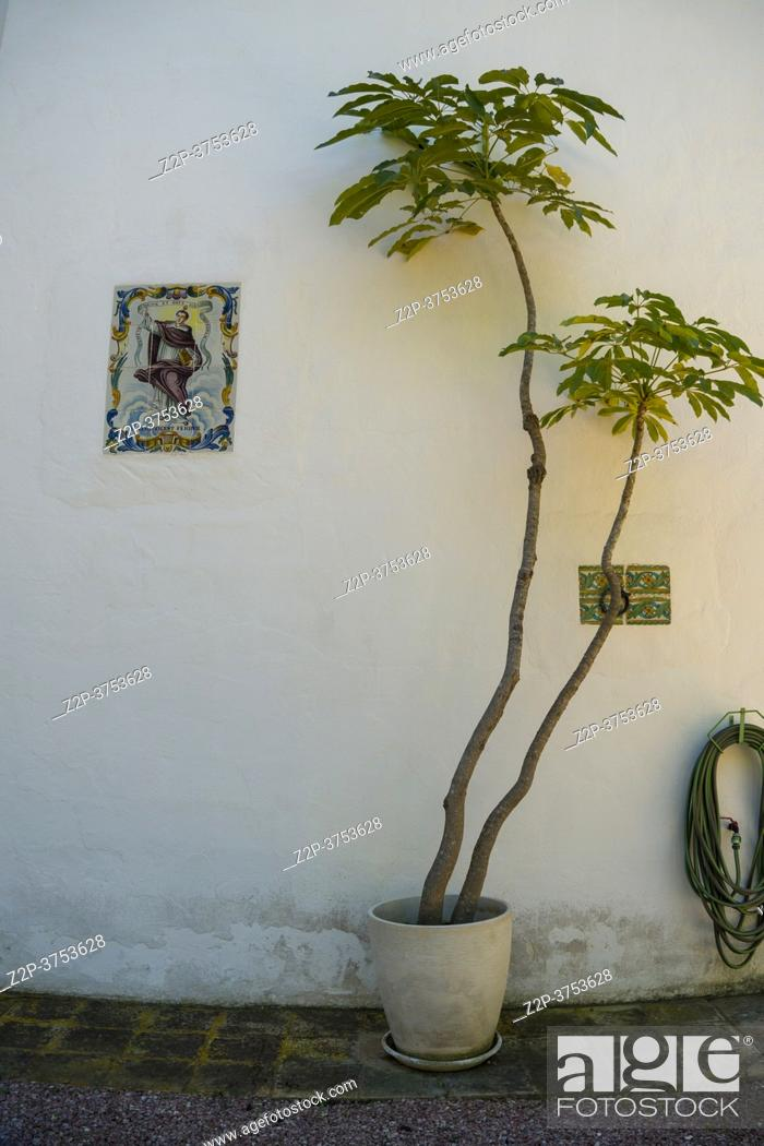 Stock Photo: Teulada Moraira Alicante Spain on November 2020, luxury villas at the sea. Tree in flowerpot detail in garden.