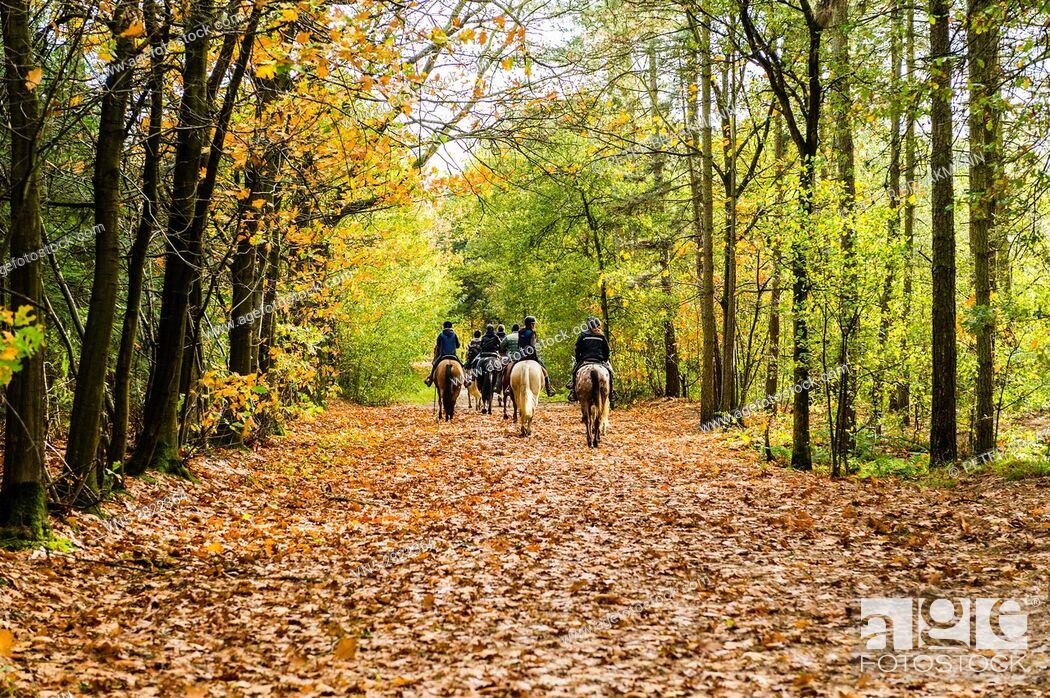 Stock Photo: Rucphen - 29-10-2013 - Group of horse riders in the forest in autumn.