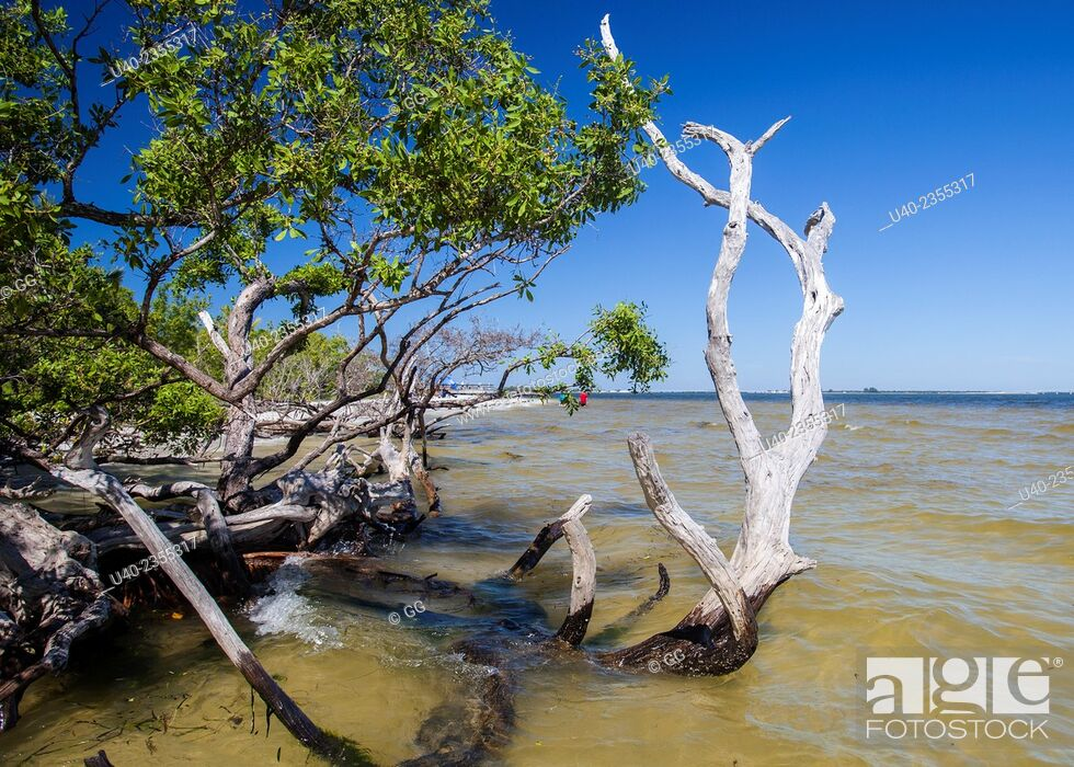 Stock Photo: Sanibal Beach, Florida, USA.