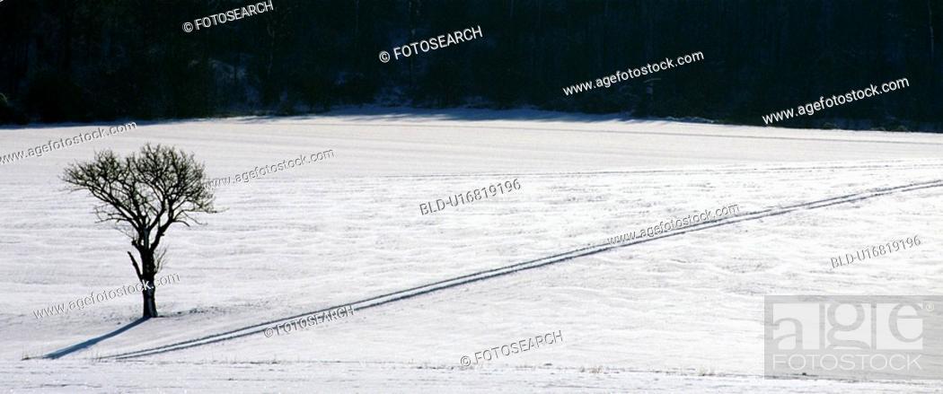 Stock Photo: weinviertel, austria, away, calf, cold, hibernal.