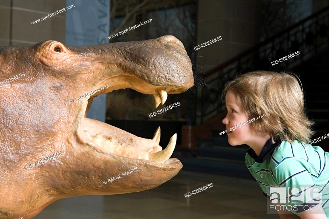 Stock Photo: Boy looking at a stuffed hippo.