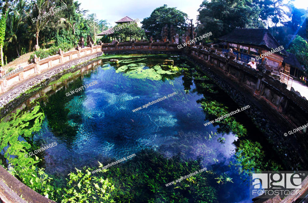 Stock Photo: High angle view of a pond, Bali, Indonesia.