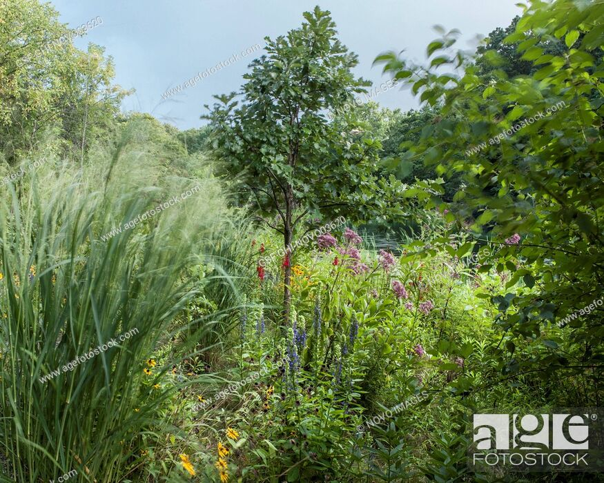 Imagen: Various Native Plants and Tall Grasses near Pond.