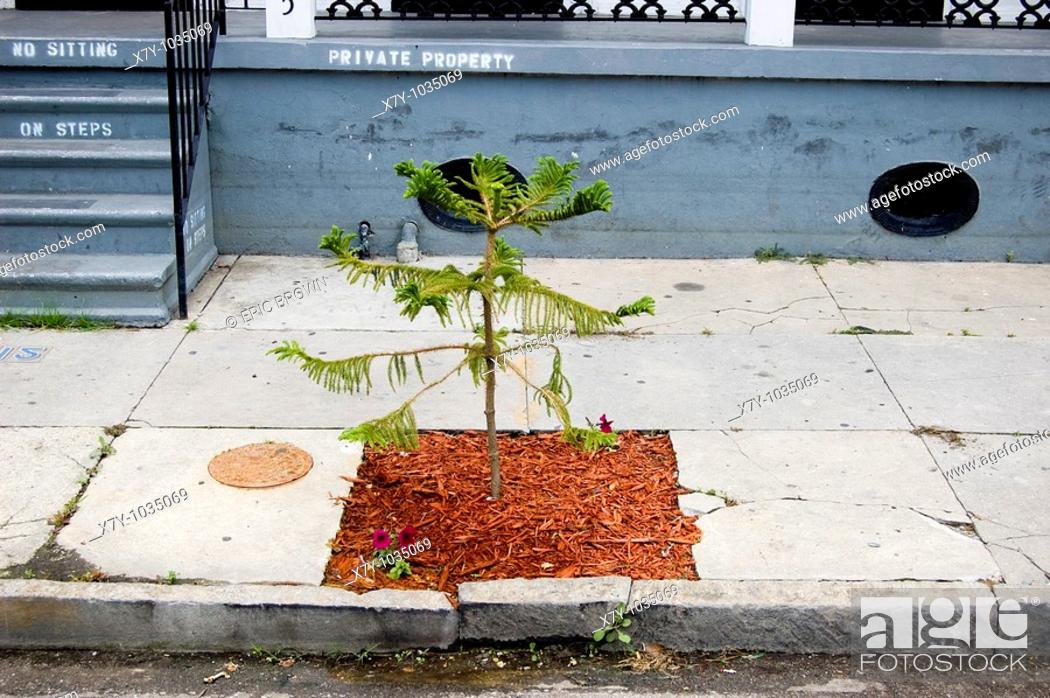 Stock Photo: A freshly planted young tree awaits its future in the Upper Ninth Ward after the flooding of Hurricane Katrina  New Orleans, LA  May 5, 2006.