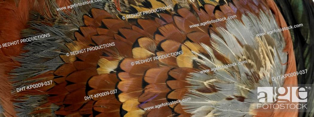 Stock Photo: Brown and black feathers close up.
