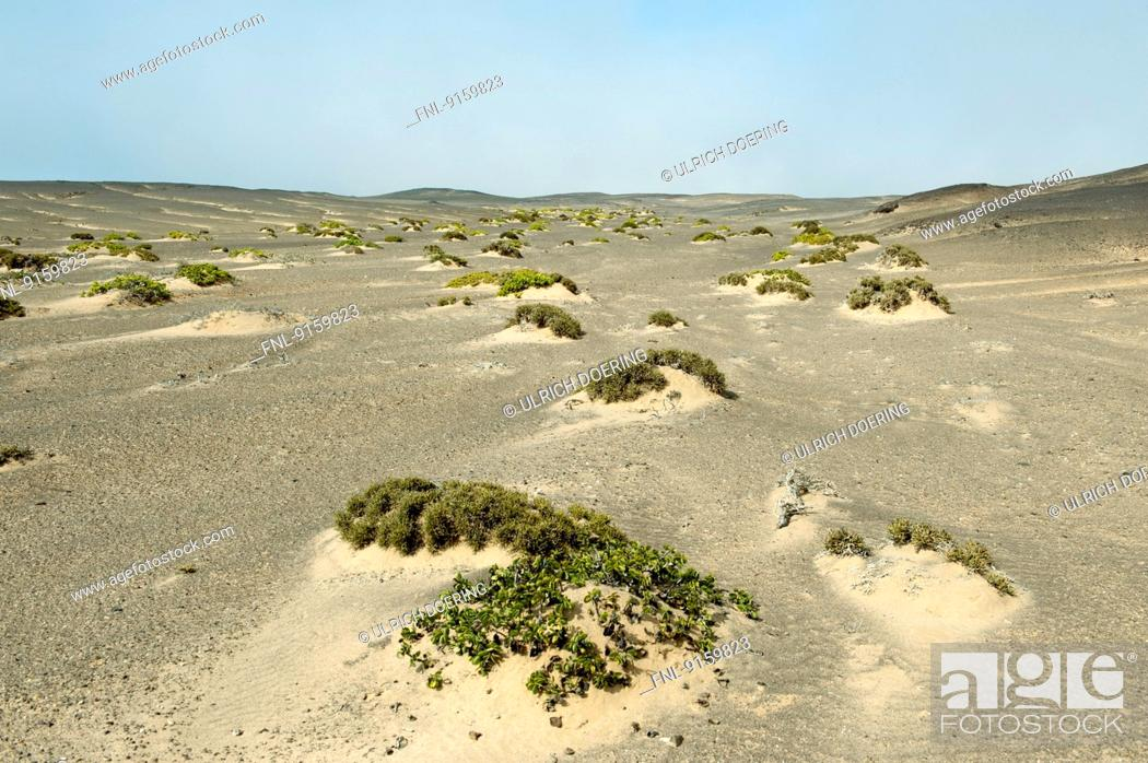 Stock Photo: Sand dunes with sparse vegetation, Skeleton Coast National Park, Namibia.