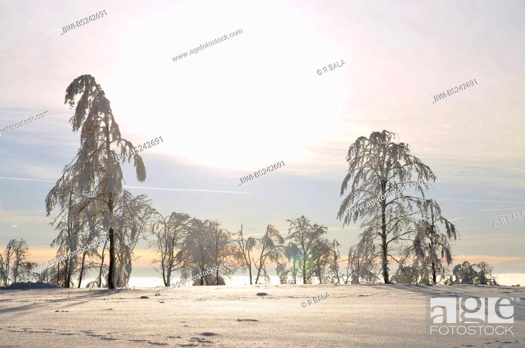 Stock Photo: sun is breaking through morning mist over a snow covered landscape, Germany, North Rhine-Westphalia, Hochsauerland.
