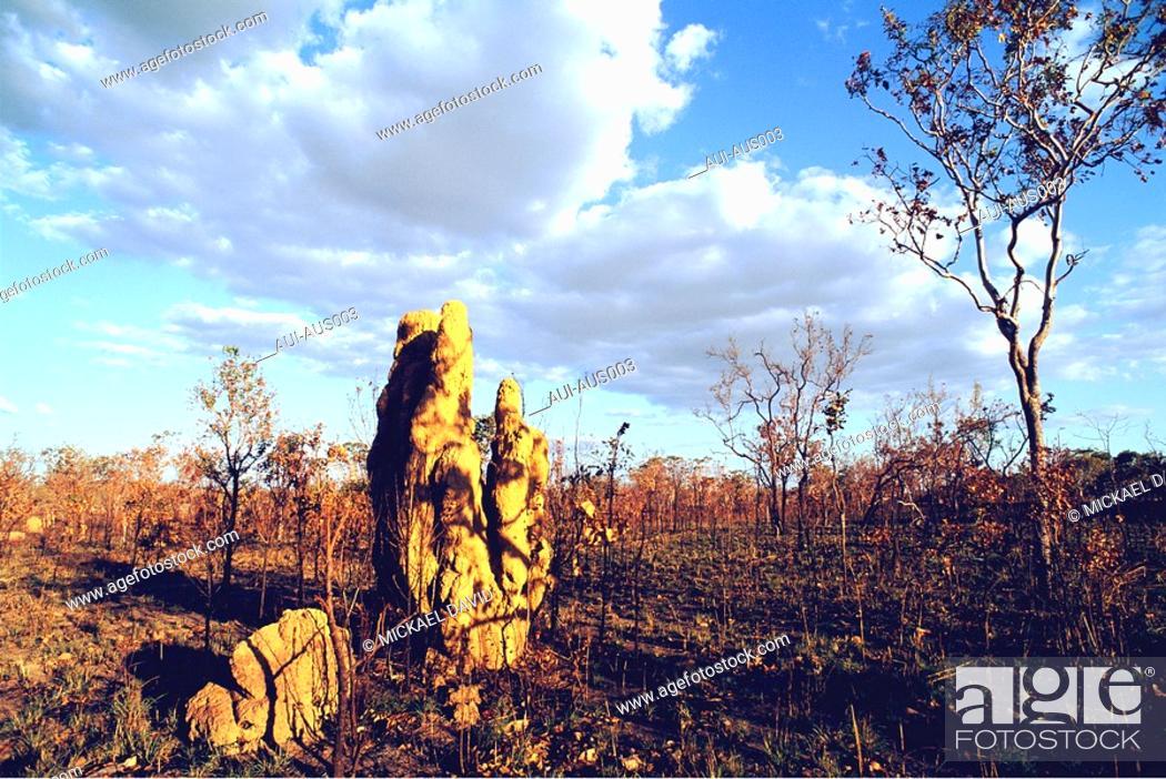 Stock Photo: Australia - North - Darwin - Termite Nest.