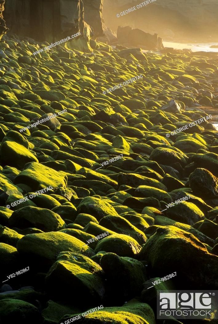 Stock Photo: CA694C Seagrass on boulders, Ellen Browning Scripps Marine Park, La Jolla, CA.