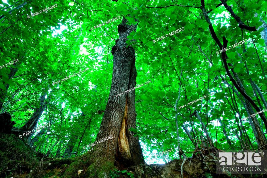 Stock Photo: Roots of a tree in La Hiruela, Madrid, Spain.