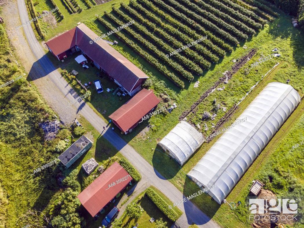 Stock Photo: Cultivation of organic vegetables, raspberries, currants, gooseberries, flowers, etc. for self-picking. Sweden. Photo: André Maslennikov.