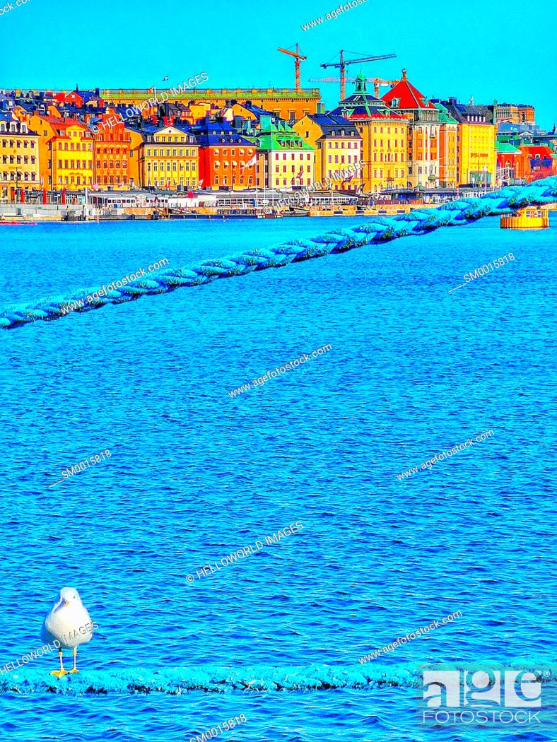 Stock Photo: Seagull standing on ship's blue mooring rope with Gamla Stan (Stockholm's old town) in background, Stockholm, Sweden, Scandinavia.