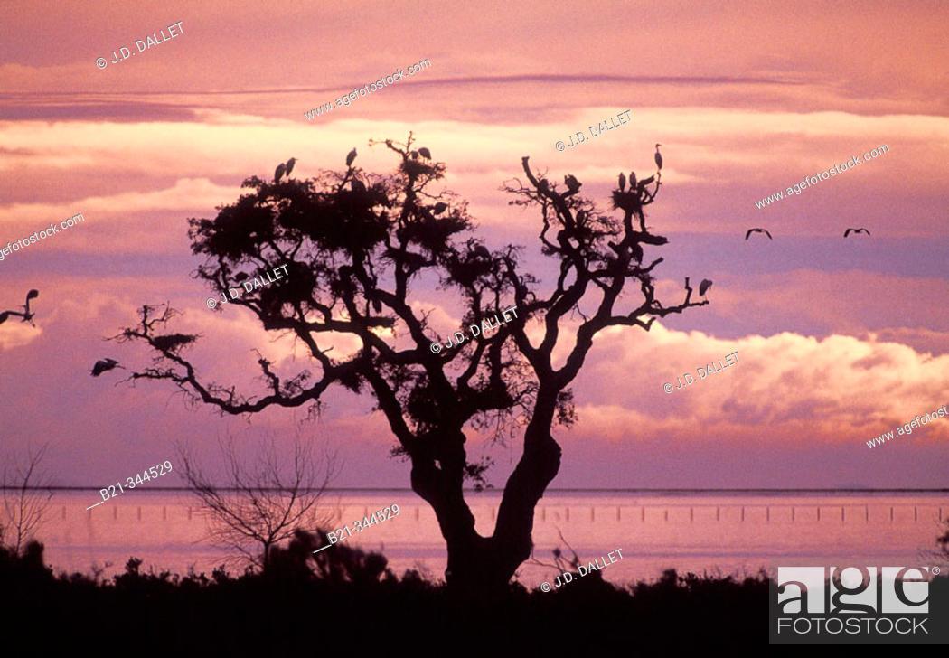 Stock Photo: Birds at Doñana National Park. Huelva province, Spain.