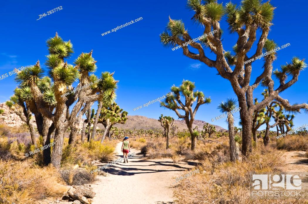 Stock Photo: Hiker on the trail to the Wall Street Stamp Mill, Joshua Tree National Park, California USA.