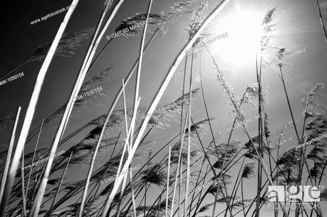 Stock Photo: Playa de Sant Salvador, Costa Daurada, El Vendrell, Provincia de Tarragona, Catalunya, España.