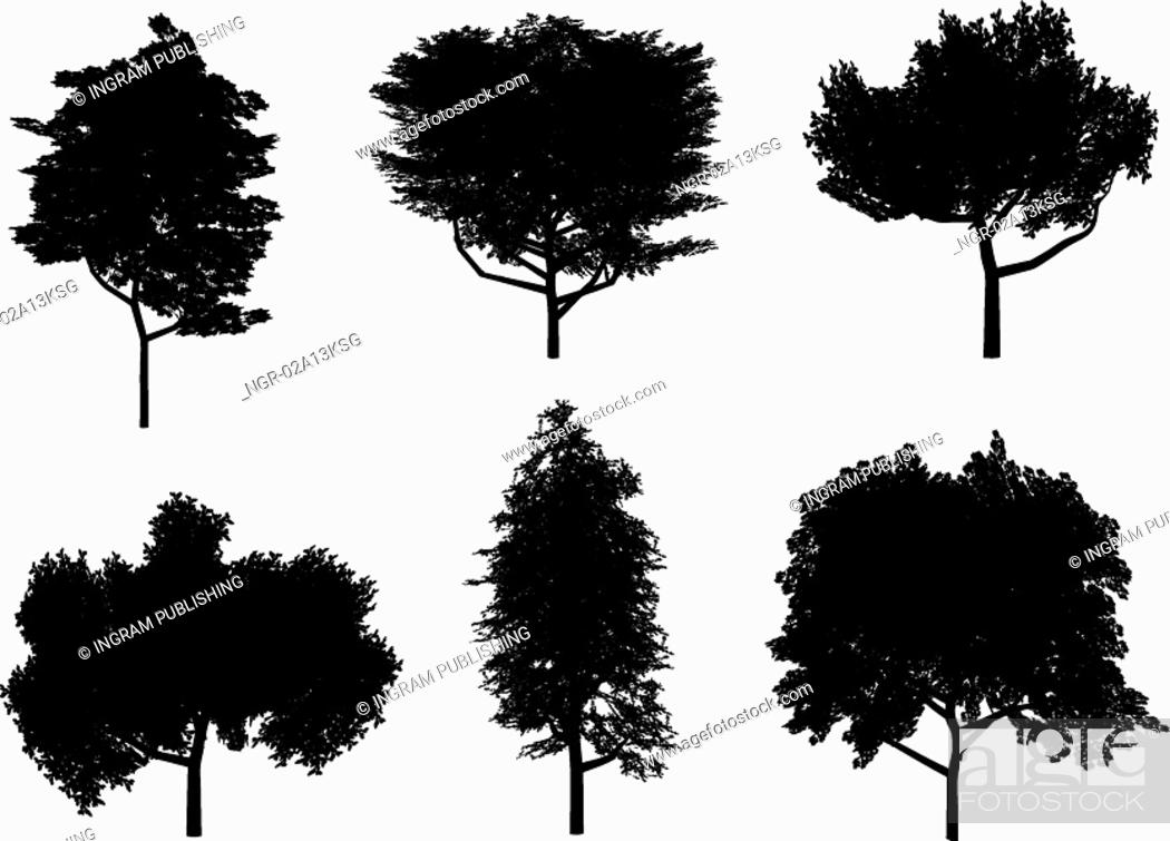 Stock Photo: tree silhouettes.