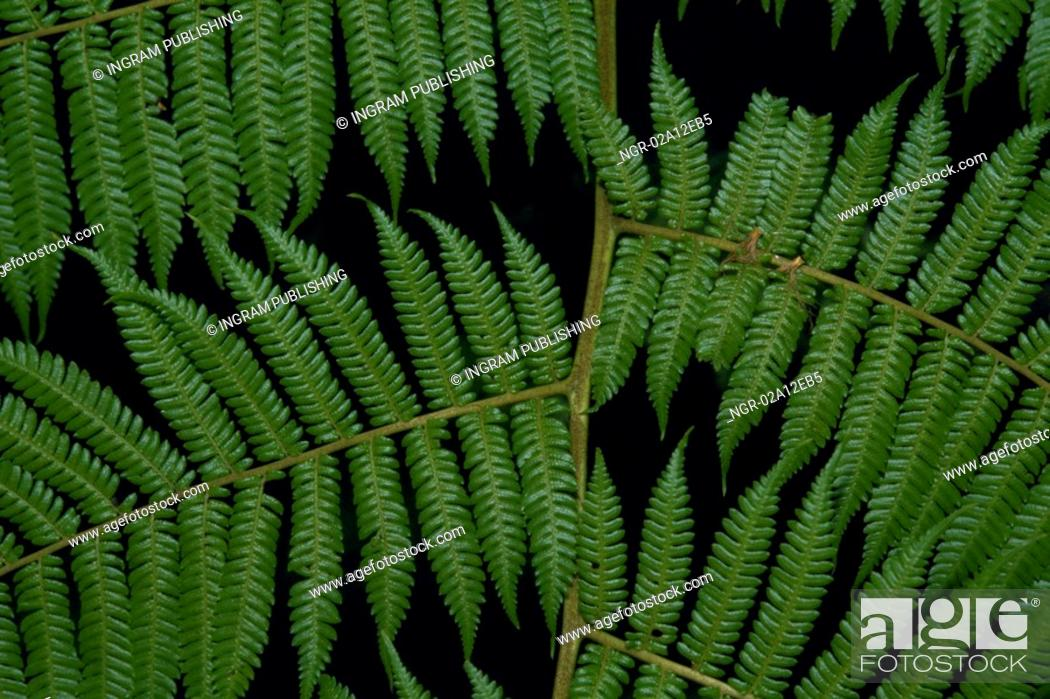 Stock Photo: Close-up of the leaves of a fern.