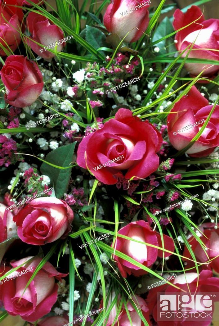Stock Photo: Bernhard, bloom, birthdays, birthday, abloom.