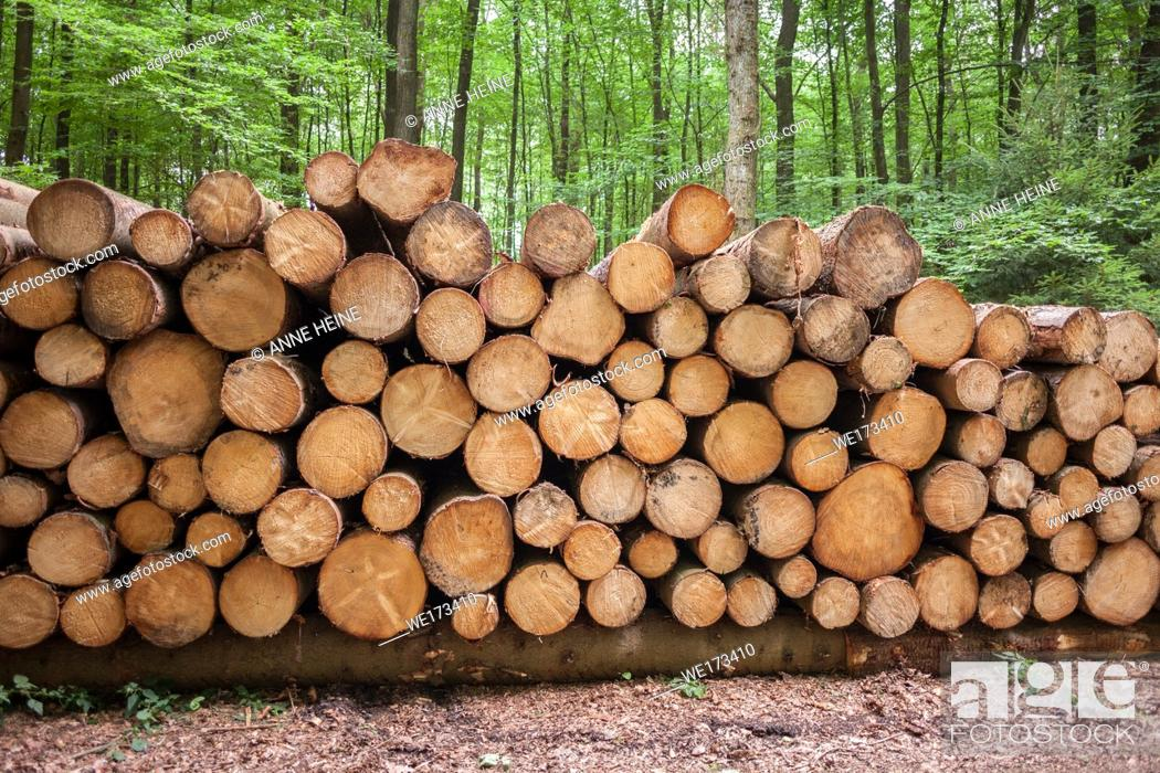 Stock Photo: Pile of roundwood timber in forest. Arnsberger Wald, Sauerland, Germany.