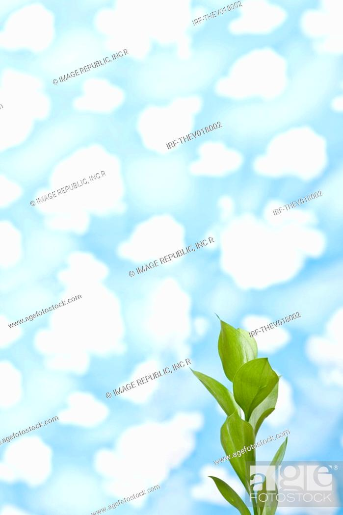 Stock Photo: wallpaper and leaves.