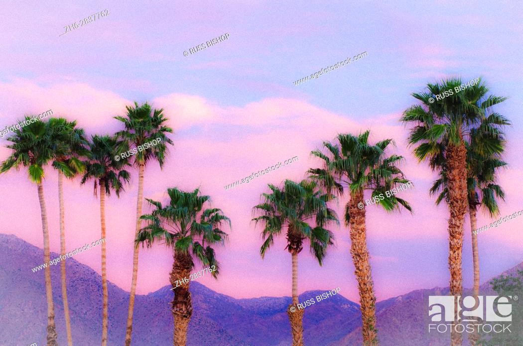 Stock Photo: California Fan Palms under San Ysidro Mountain, Anza-Borrego Desert State Park, California USA.