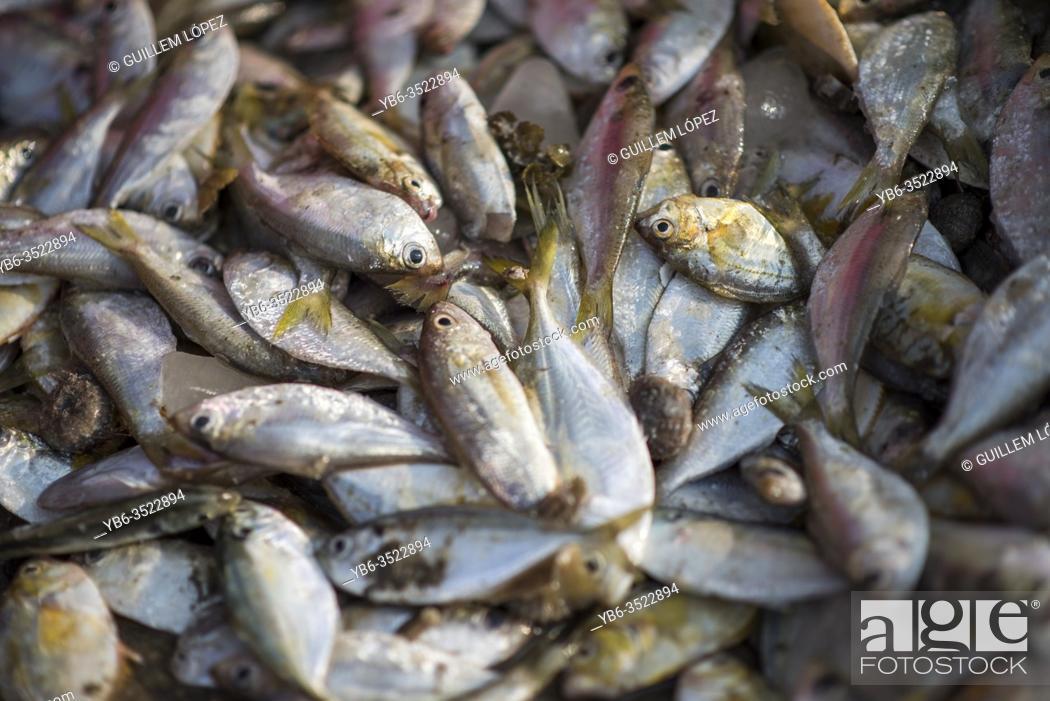 Stock Photo: Freshly caught fish at the Samut Sakhon fish market, Bangkok, Thailand.