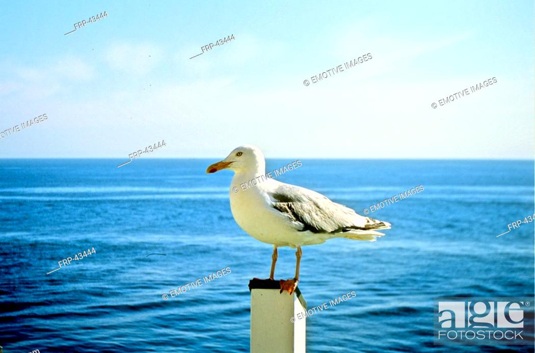 Stock Photo: Gull on a pale.