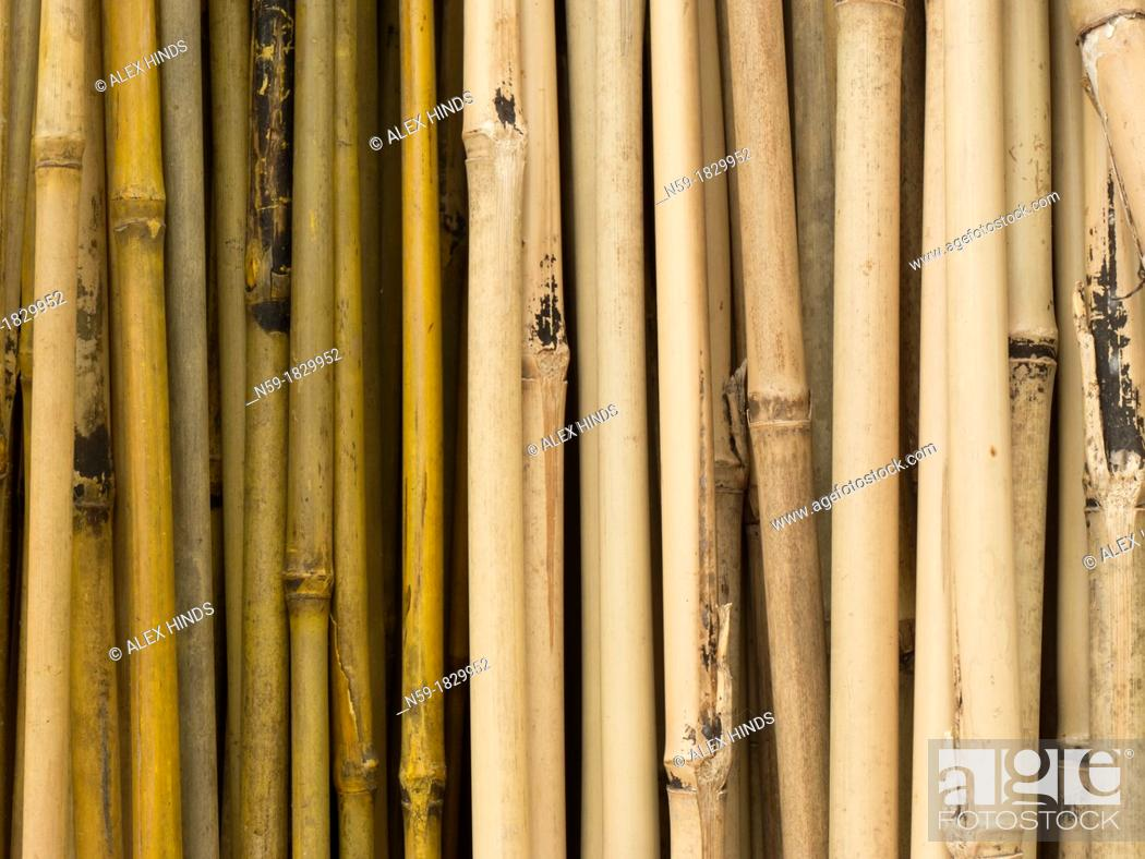 Stock Photo: Bamboo canes.