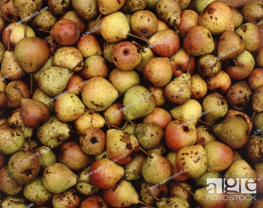 Stock Photo: Wild pears.