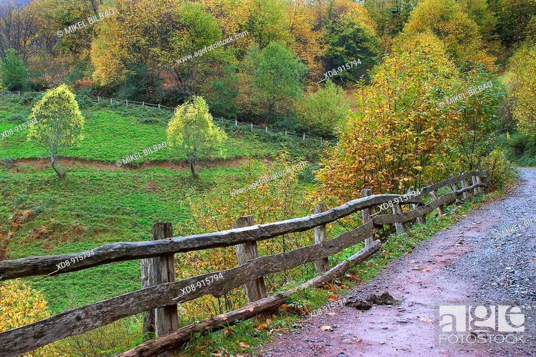 Stock Photo: Brañagallones route  Caso Council  Redes Natural Park  Asturias, Spain.