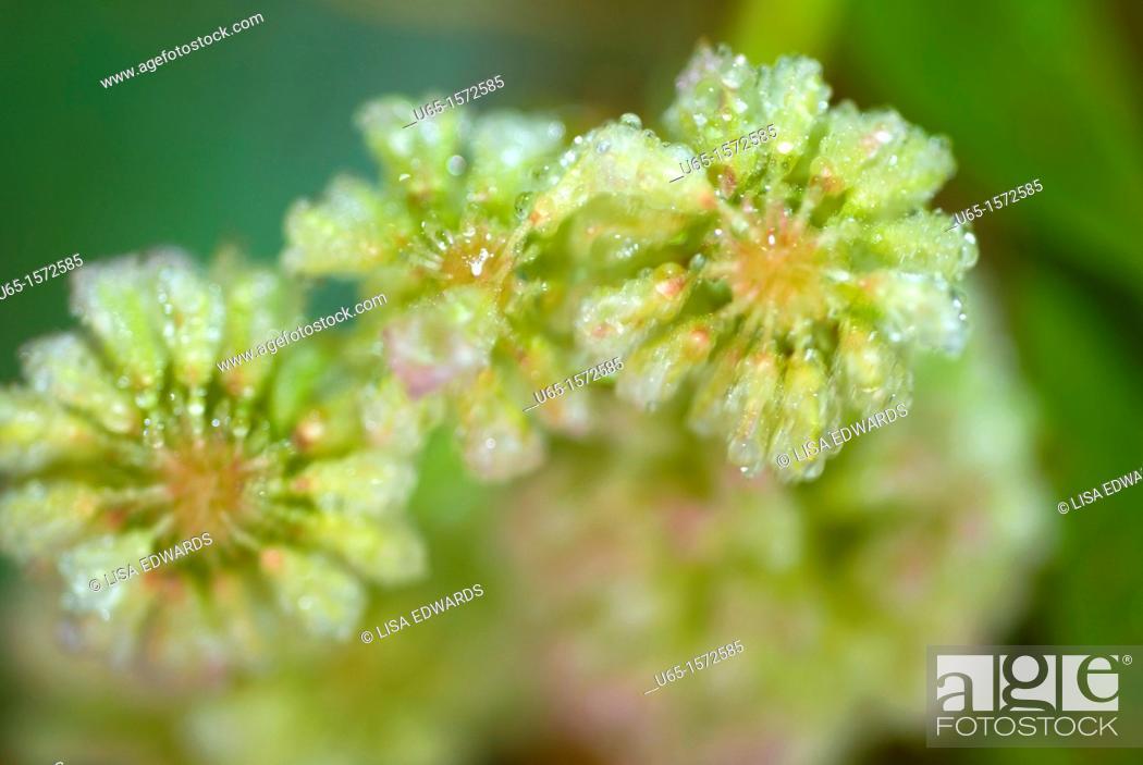 Stock Photo: Wildflowers, Lake Alice, Wyoming, USA.
