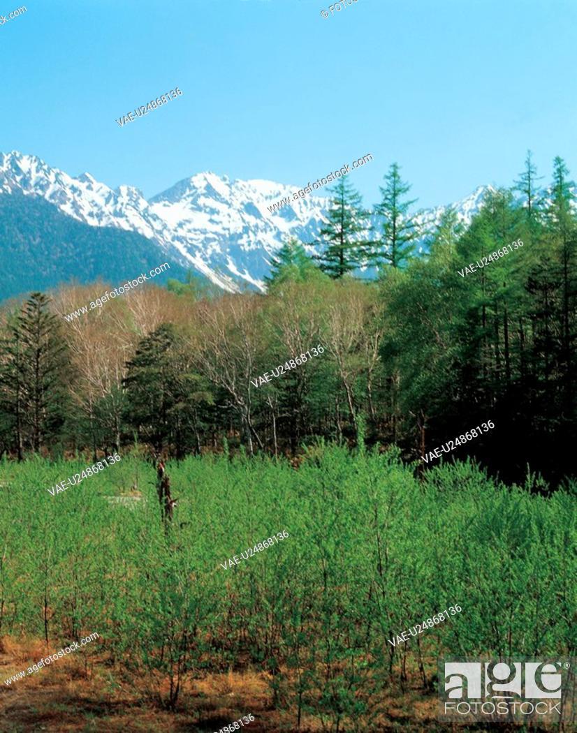 Photo de stock: plant, scenic, tree, snow-covered, snow, natural world.