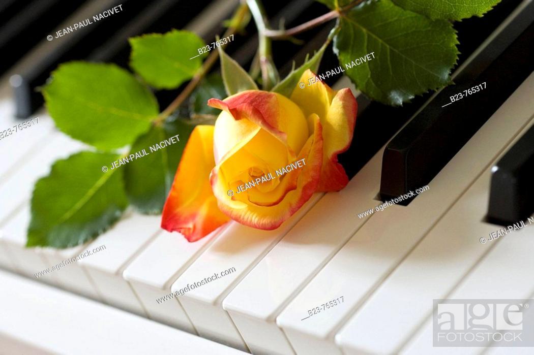Imagen: Flowers.
