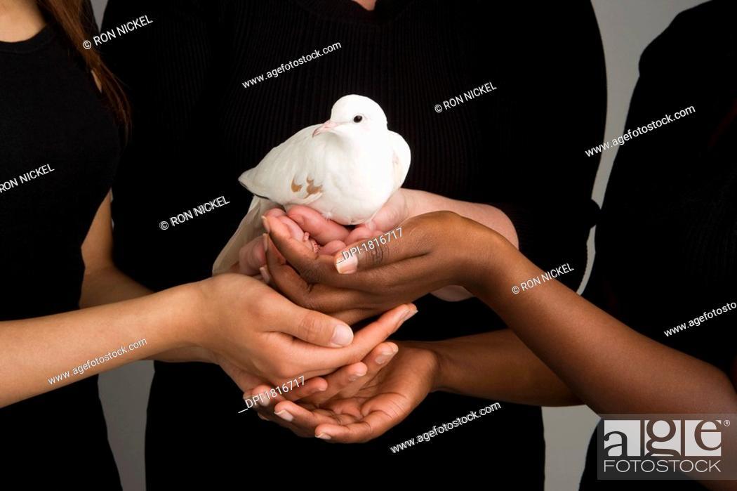 Stock Photo: Women holding a dove.