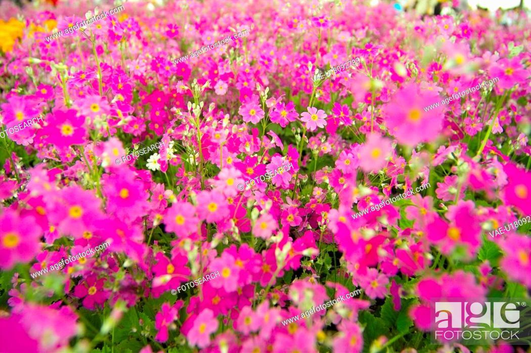 Stock Photo: blossom, flower, bloom, flowers, plants, flower garden, plant.