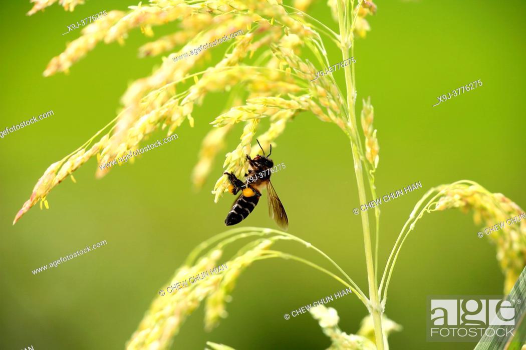 Imagen: Bee and Paddy, borneo.