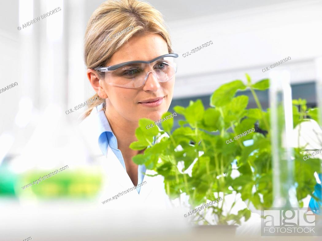 Imagen: Scientist viewing development of experimental plants in research laboratory.