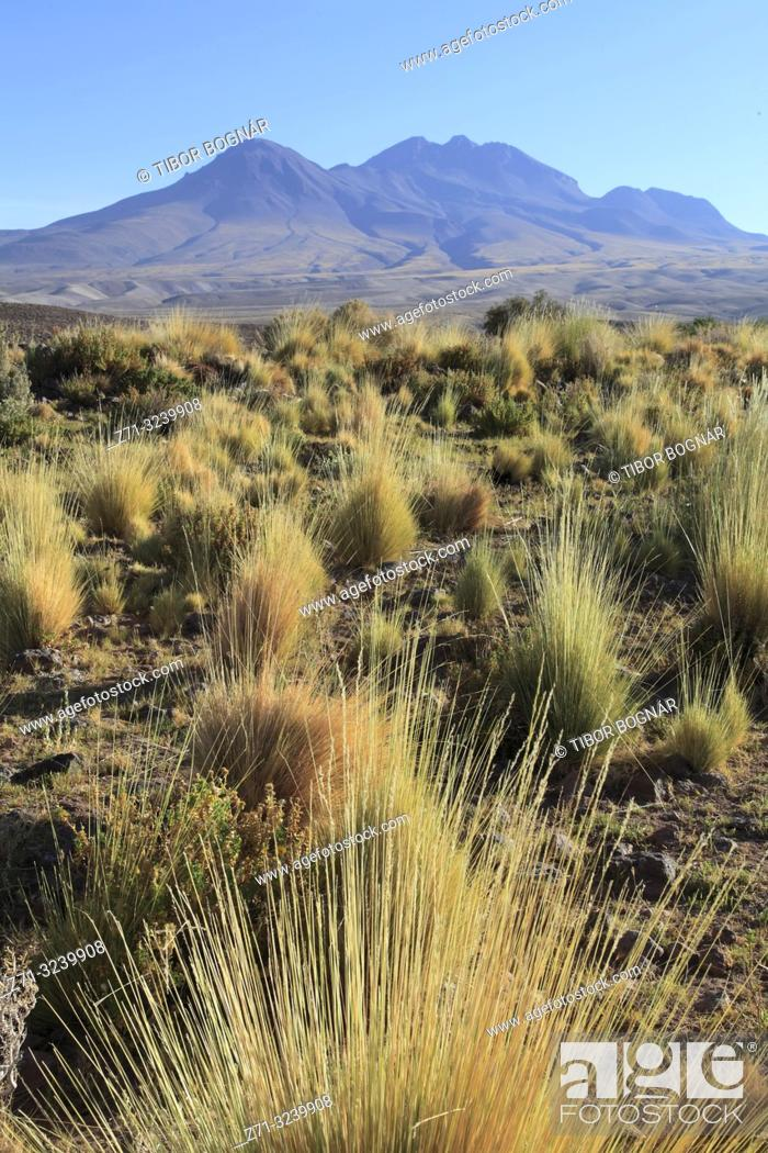 Stock Photo: Chile, Antofagasta Region, Atacama Desert, desert; flora, vegetation,.