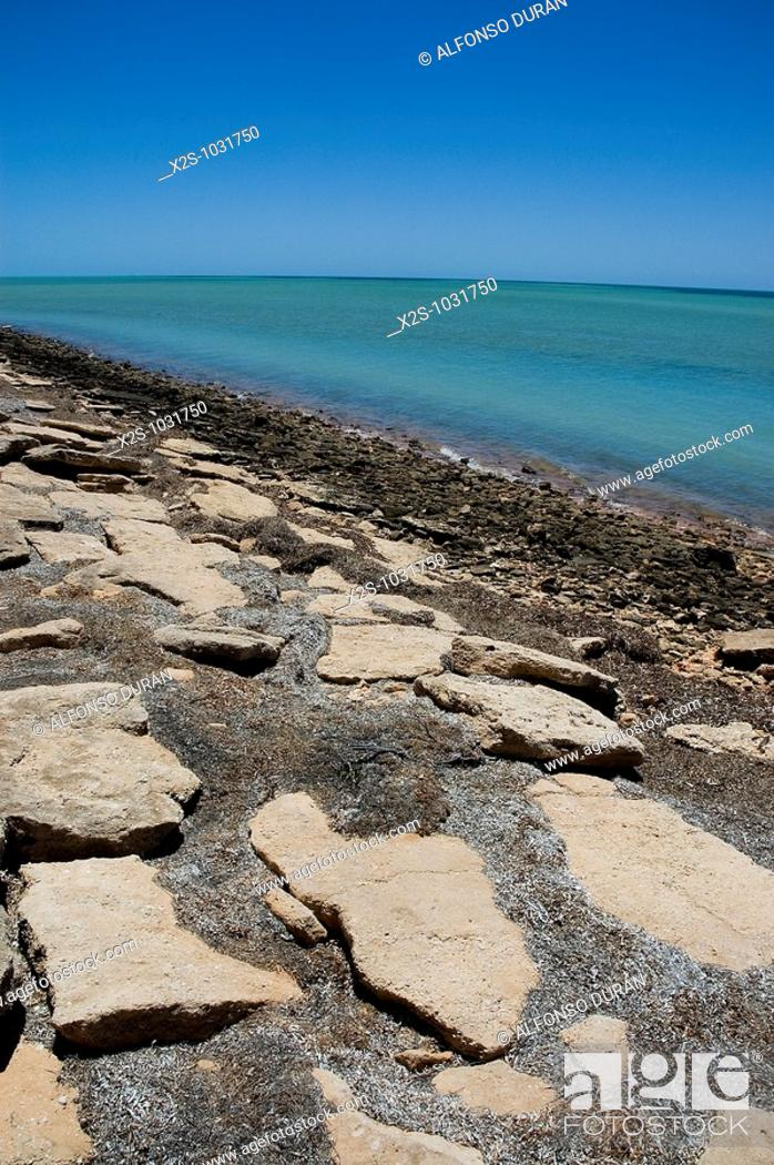Stock Photo: Monkey Mia, Shark Bay World Heritage Area, Western Australia, Australia.