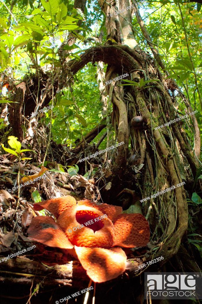 Stock Photo: Jungle.