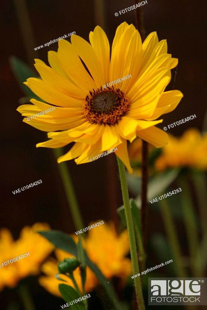Stock Photo: stamen, petal, grow, close-up, natured, wild.