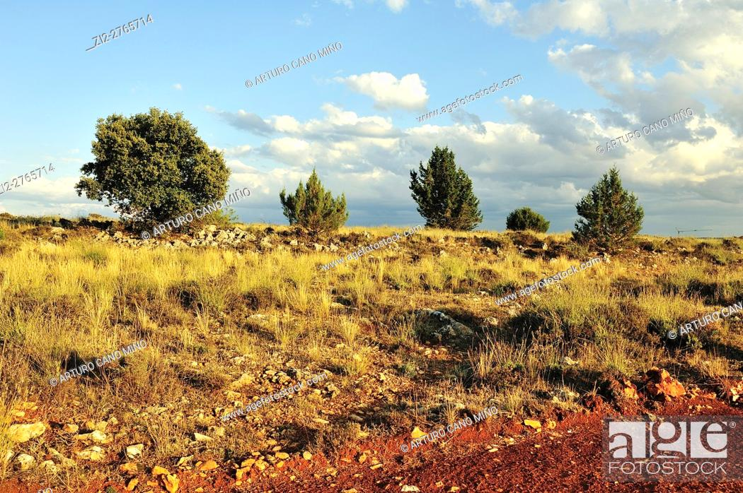 Imagen: The Alto Tajo Natural Park. Huertahernando, Guadalajara, Spain.