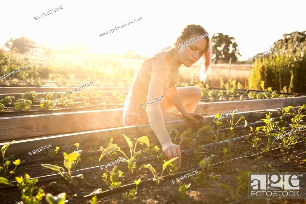 Stock Photo: Caucasian gardener weeding plants in garden.