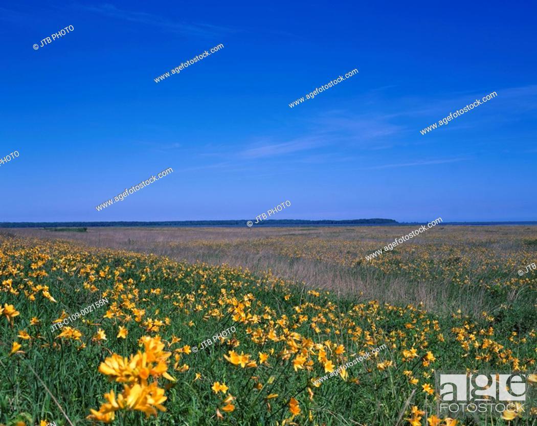 Stock Photo: Flower Odaitou Hokkaido Japan Blue sky Flower garden Prairie.