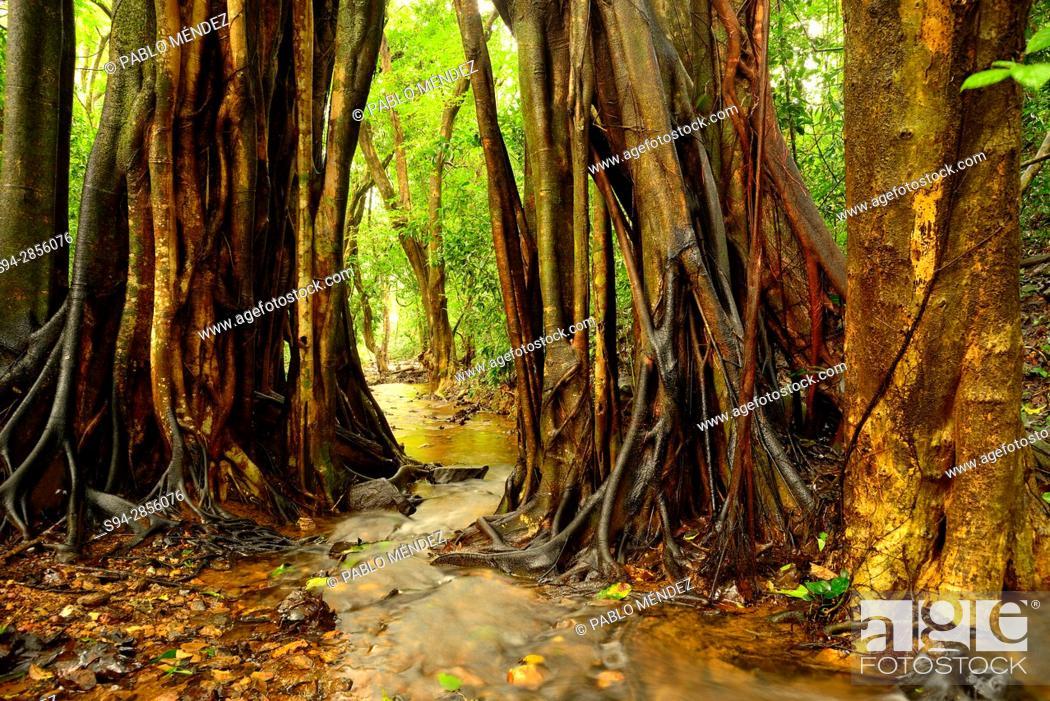 "Stock Photo: Stream in """"Tree Top"""" trail in Cotigao sanctuary, Goa, India."