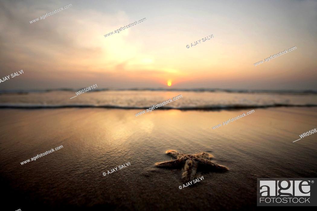 Stock Photo: Starfish on beach , Ganpatiphule , Maharashtra , India.